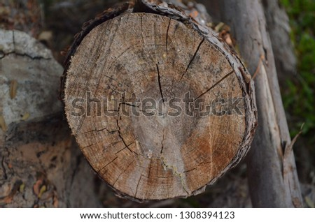 Wooden texture of big pine tree pulled down and cut into pieces with an electric hacksaw after being attacked by a thunderstorm, Pine wood grain and raw pattern