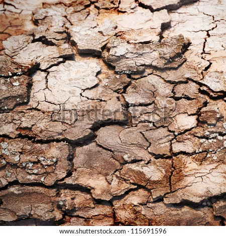 Wooden texture of oak tree can be used for background