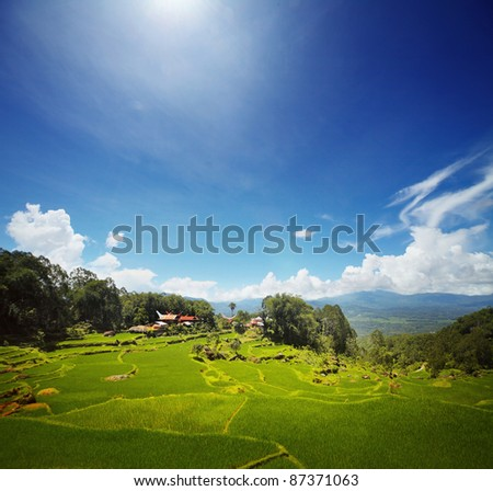 Wooden traditional Toraja's homes and green rice fields in mountains