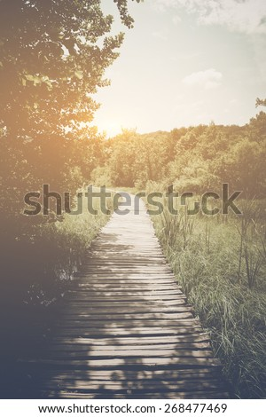 wooden trail in forest in retro ...