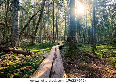 Wooden walkway forest nature, hiking trail Tyresta national park, Sweden. Sun shining through primeval forest, old-growth trees. Trekking route to natural reserve, travel outdoor in Scandinavian woods