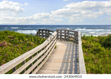Wooden walkway leading to Atlantic ocean beach with wild rose flowers in Prince Edward Island, Canada. #243064810