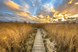 Wooden walkway through salt tidal marsh in Natura 2000 area Dollard, Groningen Province, the Netherlands. Landscape scene in windy conditions in the nature of Europe.