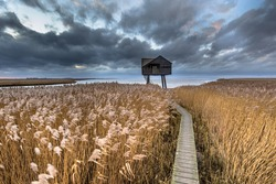 Wooden walkway through salt tidal marsh leading to observatory hide in Natura 2000 area Dollard, Groningen Province, the Netherlands. Landscape scene in windy conditions in the nature of Europe.