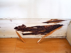 Wooden wall was damaged from Termite infested inside house.
