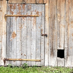 wooden wall with a door and hole for the dog