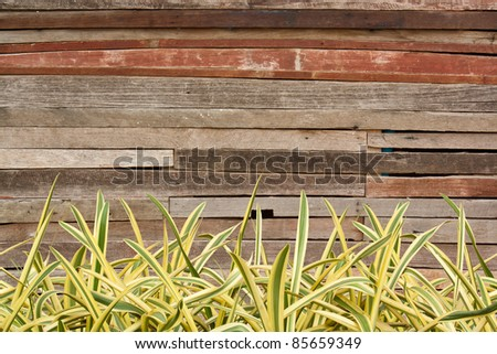 Wooden walls with green and yellow Grass.