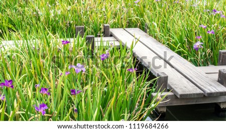 wooden zigzag bridge over a pond surrounded by irises in a Japanese garden on a summer day #1119684266