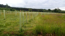 Woodland creation with biodivers UK native trees