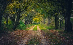 Woodland path through a tunnel of trees in autumn with leaves on the ground