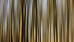 Woodland trees in winter blurred vertically to make an abstract pattern