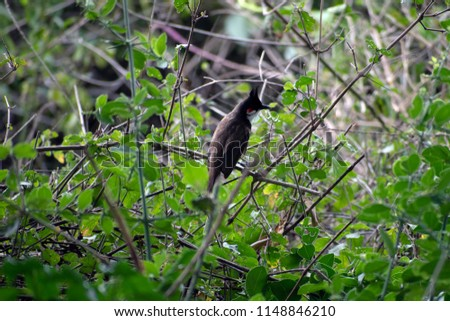 Woodpecker sitting on a dry tree