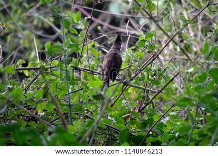 Woodpecker sitting on a dry tree