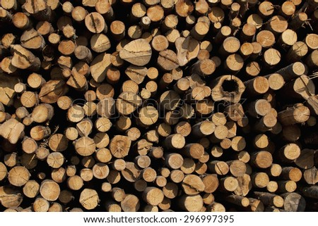 Woodpile cutting timber for the forestry and timber industry