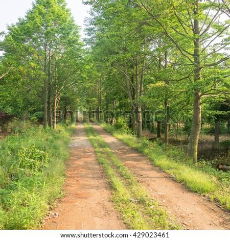 Woods dirt road #429023461