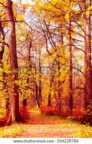 Woods Landscape Foliage of Gold - stock photo