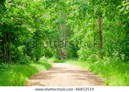 Woods Landscape Scene Green Wallpaper