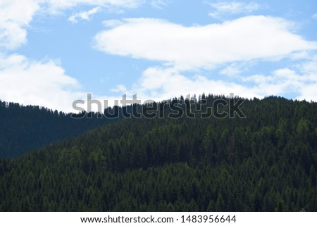 Woods on woods in the mountain valley #1483956644