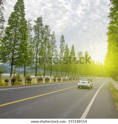 Woods road #193188554