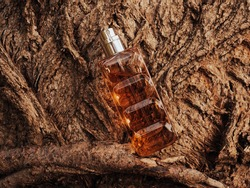 Woody fragrance. Perfume spray bottle on wooden tree bark as background. Transparent glass cologne aroma template. Woody notes of perfume. Luxury product package closeup. Minimal nature spa concept