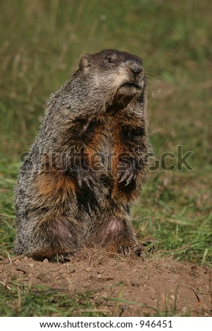 Woody the Ground Hog