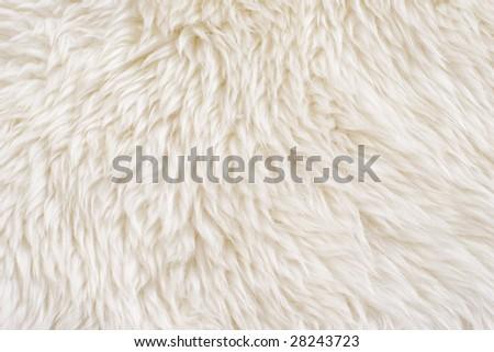 Wool background. Detail of sheep fur