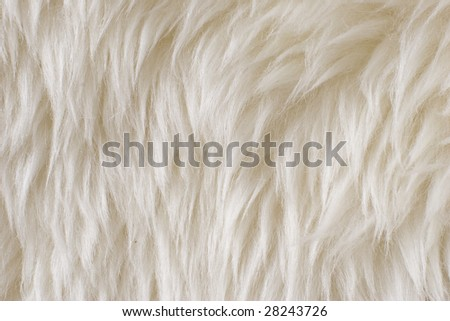Wool background. Detail of sheep fur