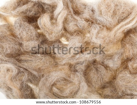 Wool  fleece texture