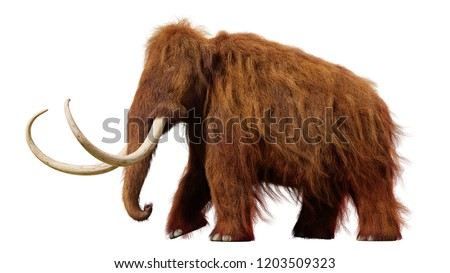 woolly mammoth, walking prehistoric animal isolated on white background (3d illustration)