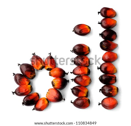Word oil made from fresh palm oil seeds isolated on white background, selective focus.