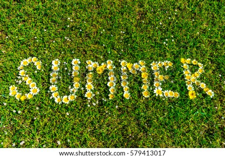 Word summer lettering with beautiful daisy flowers in a green meadow. #579413017