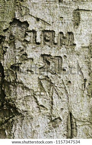 Words and numbers carved in a tree bark  #1157347534