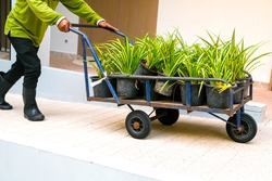 Work in garden. Man working with flowers. Carrying pot flowers in a cart. Garden work, workplace. Green color. Copy space banner.