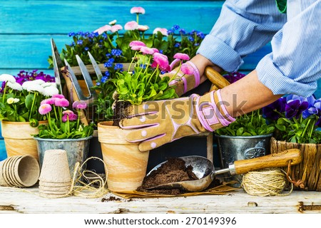 Work in the garden, planting pots #270149396