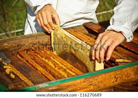 Worker bees on honeycomb, outdoor shot - stock photo