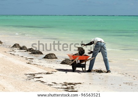 worker cleaning a tropical beach