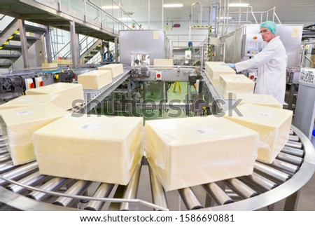 Worker handling large blocks of cheese at production line in processing plant
