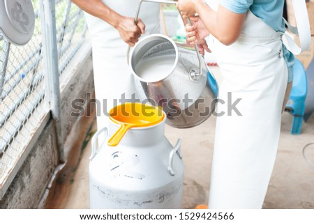 worker puring milk into a container with milking  machine milking in dairy farm. #1529424566