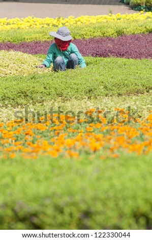 Worker trimming flower in the garden, with sun protected dress