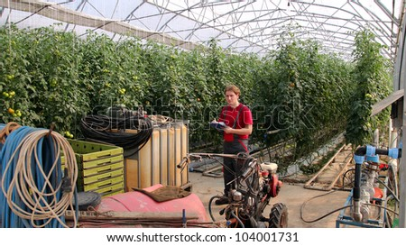 Worker writing on clipboard in greenhouse. Greenhouse produce. Food production. Tomato growing in greenhouse.
