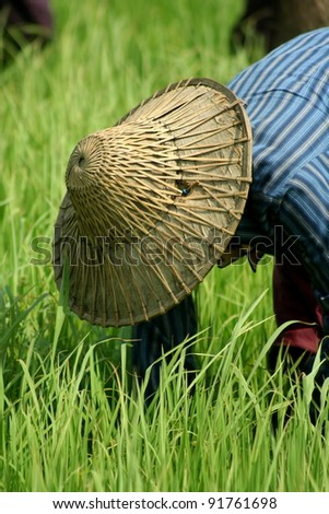 Workers in rice field in Myanmar