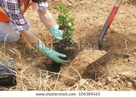Workers planting tree