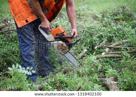 Workers sawing off the branches of an acacia with a chain saw. #1318402100