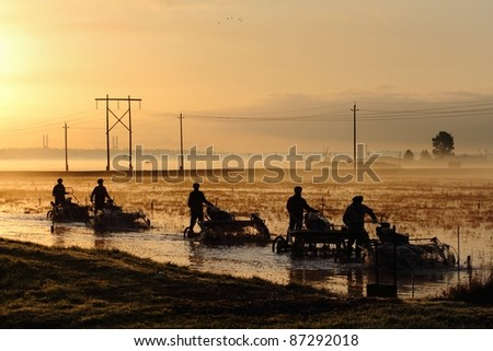 Workers use threshing machines in a flooded cranberry bog at dawn. The threshers loosen the cranberries from the vine which float to the surface for harvesting. Richmond, British Columbia, Canada.