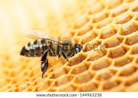 Working bee on honeycomb