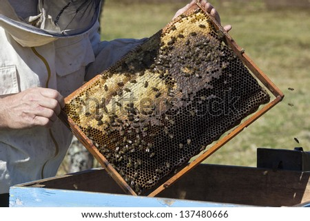 working bees on honey cells - stock photo