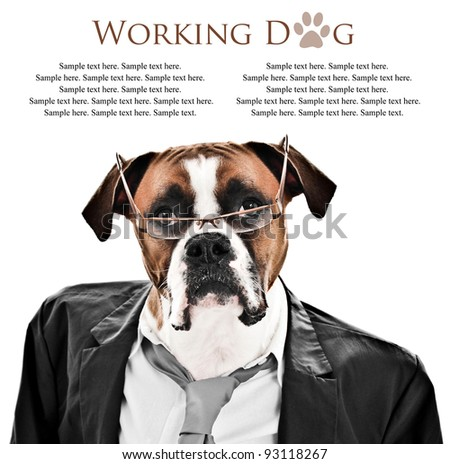 Working Boxer Dog ready for business wearing a suit, tie and glasses with text space above