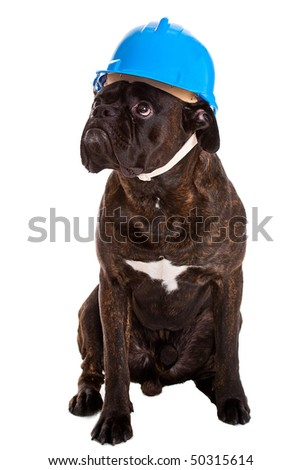 Working dog in helmet - stock photo