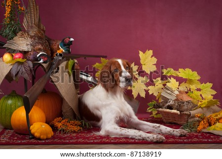 Working dog resting after the hunt beside a shotgun and several hung pheasant and woodcock, studio, horizontal