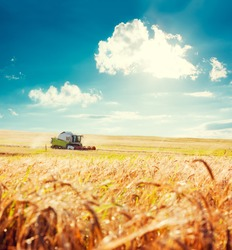 Working Harvesting Combine in the Field of Wheat. Agriculture Concept. Toned Photo with Copy Space.